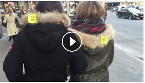 """Have you seen these """"I'm an Asshole I Wear Fur"""" stickers around New York City?? Amazing!  https://www.facebook.com/celine.marcoz.3/posts/1702957813316343"""