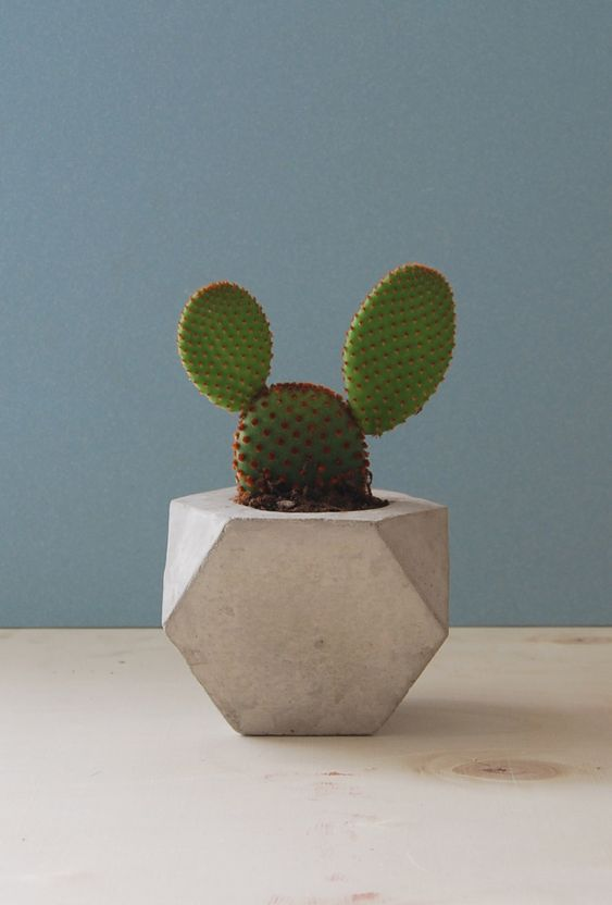 EDRO DESIGN.'''I have a cactus just like this one..I call it my Mickey Mouse cactus..:):