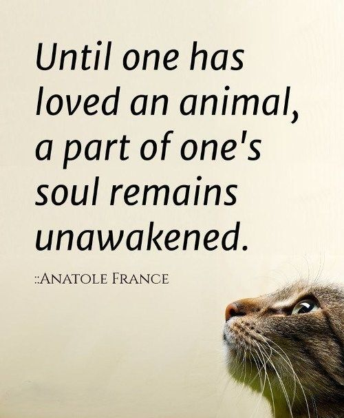 15 Quotes That Will Make You Want To Hug Your Pet