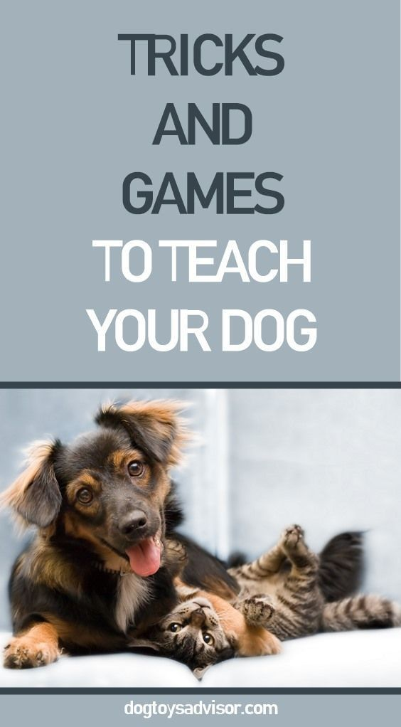 Teach Your Dog These Interactive Tricks And Games From Playing