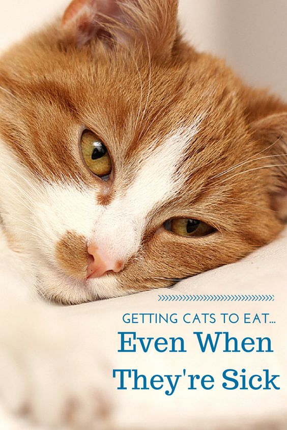 Cats, Blog and Tips on Pinterest