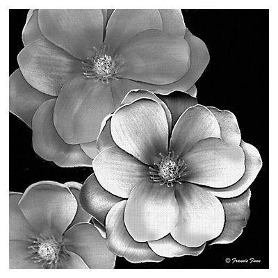 Black And White Magnolia Canvas Art Print Black And White Artwork Black And White Picture Wall Canvas Art Prints