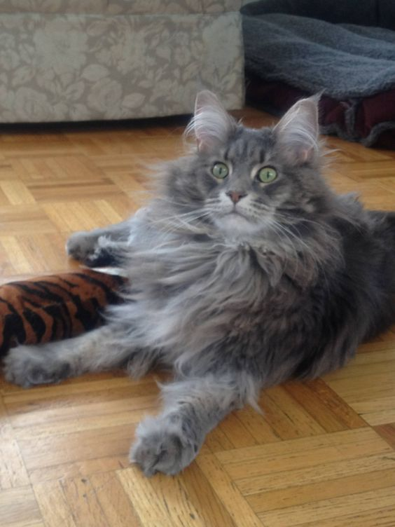 animals that look like cats