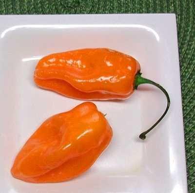 El habanero es un chile pequeño (entre 2 y 6 centímetros de largo) pero extremadamente picante.  En estado maduro varía de color desde el am...