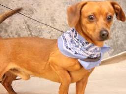 Super Urgent! WATKINS has 2 Days Left to Live!    http://dogsindanger.com/dog.jsp?did=1359594384091