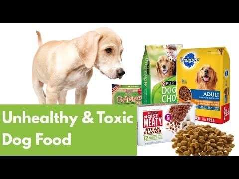Really Bad Dog Food Pictures