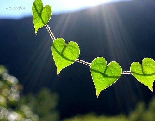 al you need is love, design, green, heart, heart leaves, hearts