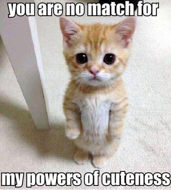 19 Clean Cat Memes Laughing So Hard Meme Cell Cute Animals Funny Animal Pictures Cute Animal Pictures