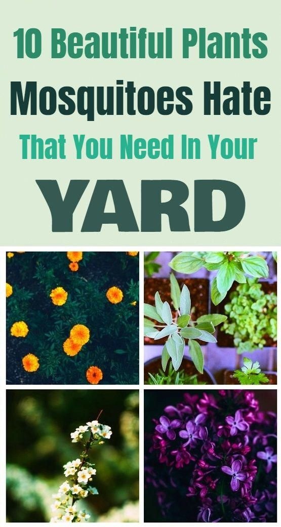 Advice For Growing Beautiful Flowers Produce And Other Plants
