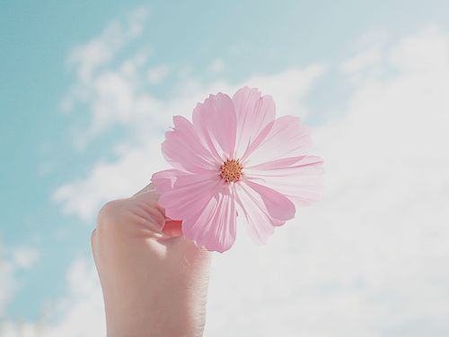 Imagem de flowers, sky, and pink