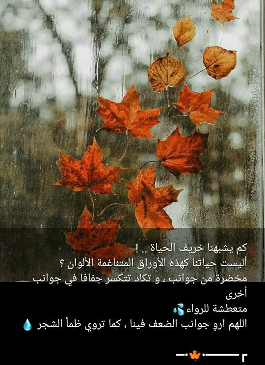 Pin By صل على النبي On صباحات ومسائات Romantic Love Quotes Beautiful Morning Romantic Love