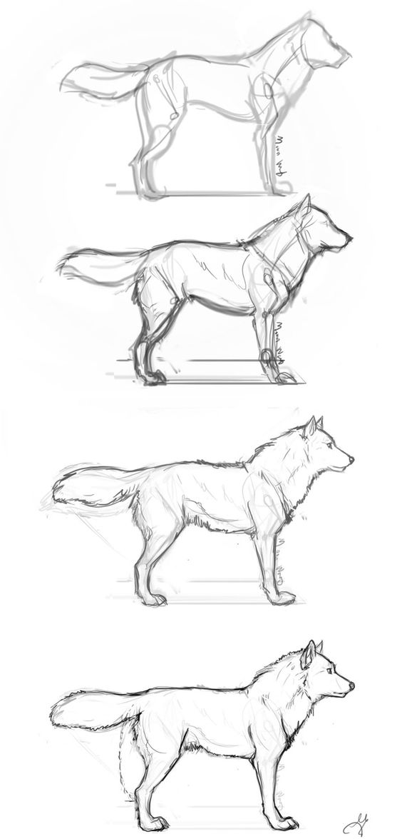 Wolves, Step by step and Drawings on Pinterest