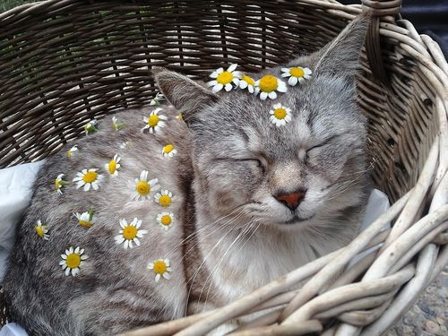 aesthetic, animal, cat, cute, flowers, grunge, hipster, indie, nature, pale, pastel, soft grunge, tumblr