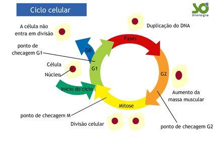 Controle do Ciclo Celular - Só Biologia