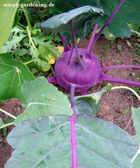 Ein Garten Blog mit nützlichen Tipps rund ums Thema Garten. Tolle Beiträge, schöne Fotos, informativ und interessant.