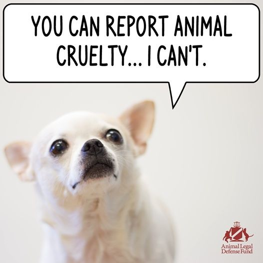 BE A VOICE FOR THE VOICELESS! ✿⊱╮Be that voice, if you see anything that looks like it could be harming an animal....call and report it.  Be a guardian of animals everywhere by becoming an ambassador at http://www.fuzeus.com