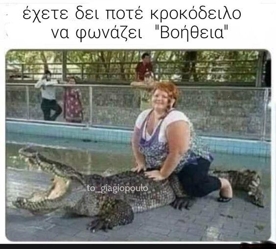 έχετε δει ποτέ κροκόδειλο | to_giagiopoulo