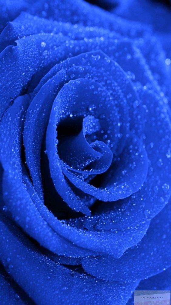 Descarga Los Mejores Fondos De Pantalla De Color Azul Gratis Blue Flower Wallpaper Blue Roses Wallpaper Blue Aesthetic Pastel