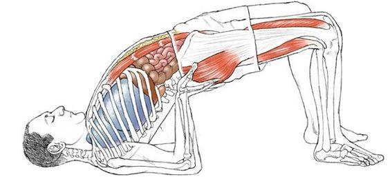 Llamamos metabolismo a los procesos químicos que crean energía en el cuerpo y es regulado por el sistema endocrino, especialmente por la glándula tiroides. El yoga tiene un poderoso efecto estimulante y de fortalecimiento sobre los órganos endocrinos y por lo tanto puede aumentar el metabolismo para quemar más calorías.