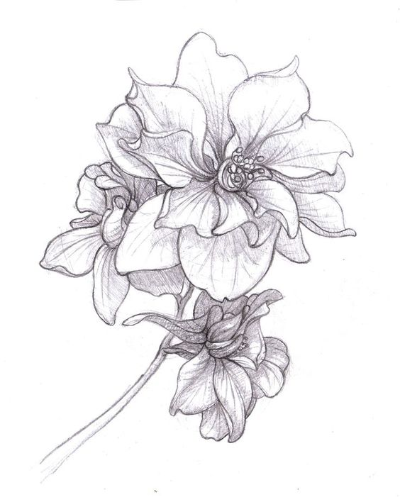 Larkspur Tattoo on Pinterest | July Birth Flowers, Birth Flowers ...