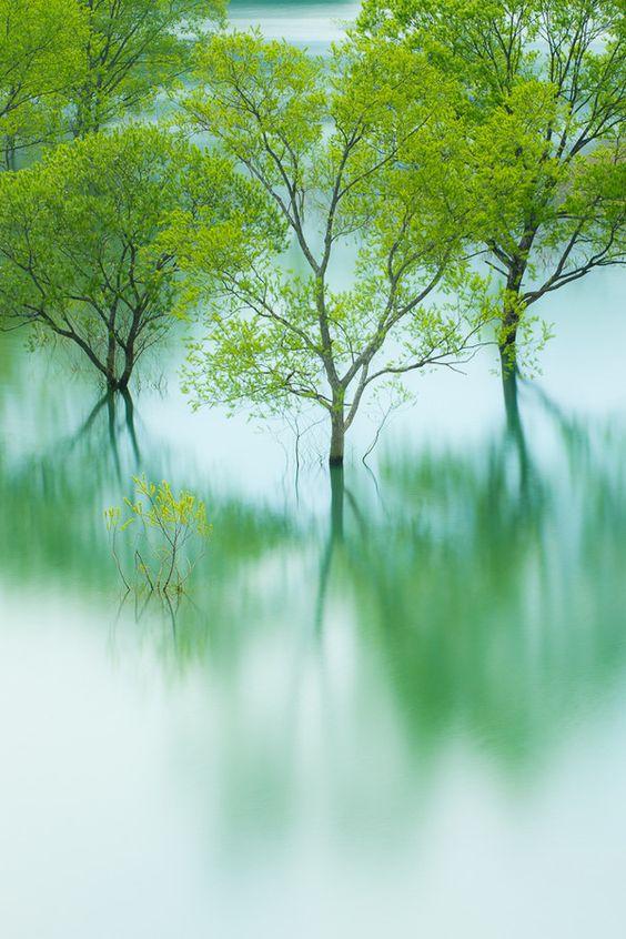 by makoto shukawa / reflections #trees