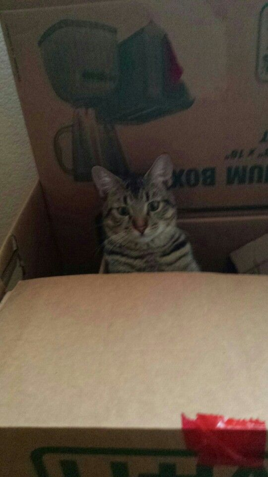 Last year's picture thought it was cute cat in the box
