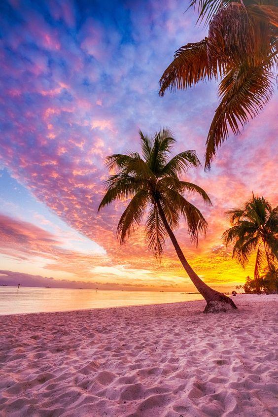 ハワイの砂浜とヤシの木