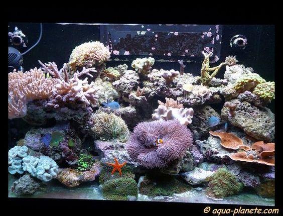 Aquariophilie. Forum recifal, aquarium eau de mer, forum redseamax 130, 250 et 500.: Quelques RSM 250 du forum