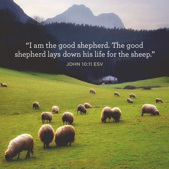 """I am the good shepherd. The good shepherd lays down his life for the sheep."" –John 10:11 ESV:"