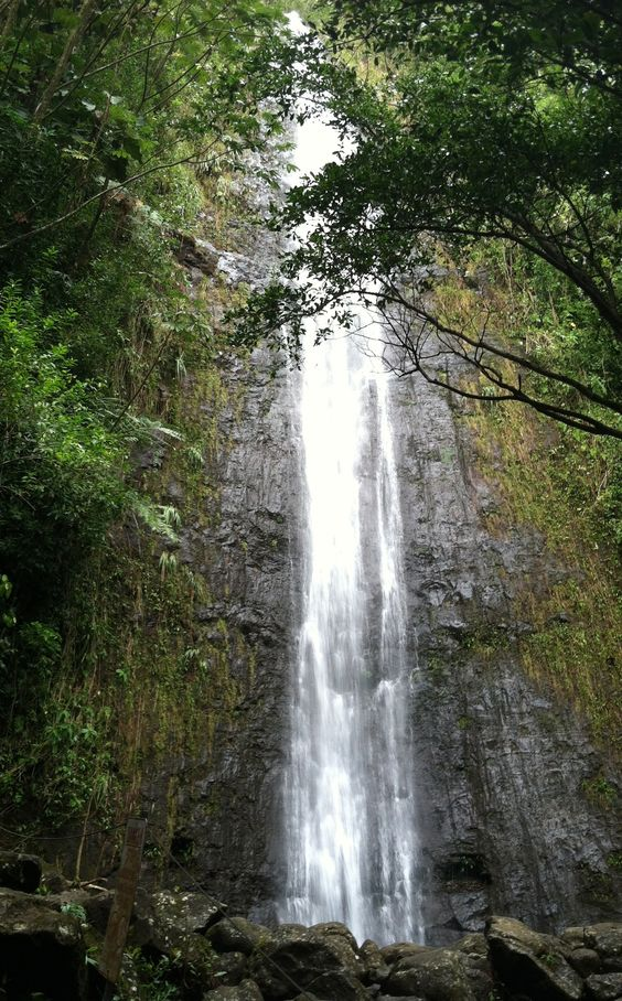 Manoa Falls - http://www.nauwalenotours.com/manoa-falls/