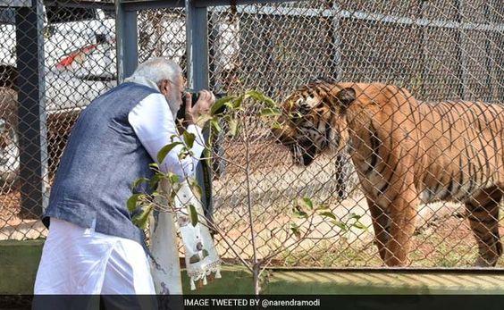 PM Modi's Close Encounter During A Jungle Safari