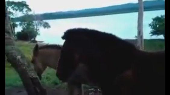 VIDEO NO ESPERADO