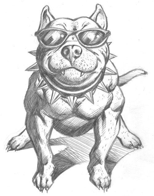 Image Result For Drawings Of Pitbulls Dibujos De Pitbull
