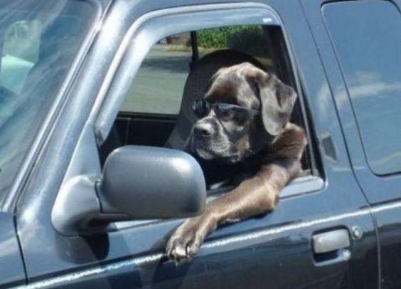 Beware Of Dogs Pretending To Be Human - Neatorama
