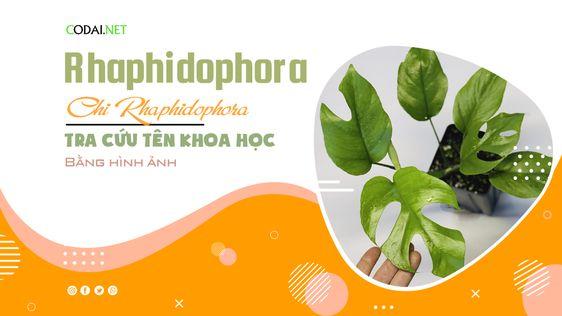 Tra cứu tên khoa học của các loài cây thuộc chi Rhaphidophora (chi Đuôi Phượng) bằng hình ảnh