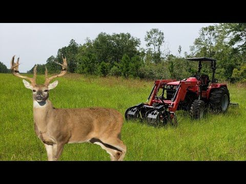 Land Clearing With Mahindra 4540 Tractor Big Buck Trail Make Your Own Deer Funnel Youtube Land Clearing Tractors Big Bucks