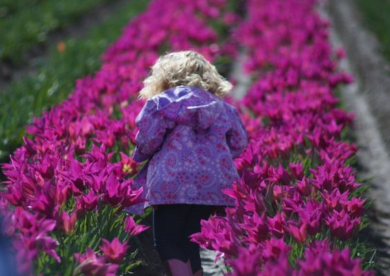 The 2016 Wooden Shoe Tulip Festival in Woodburn will start early for the second year in a row, this time before spring even begins.