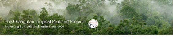 Work with us - The Orangutan Tropical Peatland ProjectOuTrop