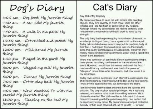 Dog's Diary Vs Cat's Diary!