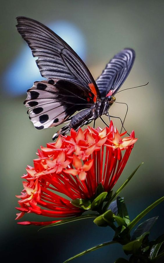 Butterfly Feeding on Flowers