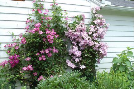 Katie's garden in Ohio--click through to see more photos of this garden!