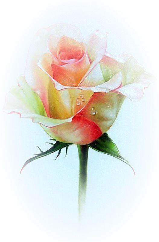 Rosen Rosa Rosa Rosa Janine Morin Aquarela Aquarell