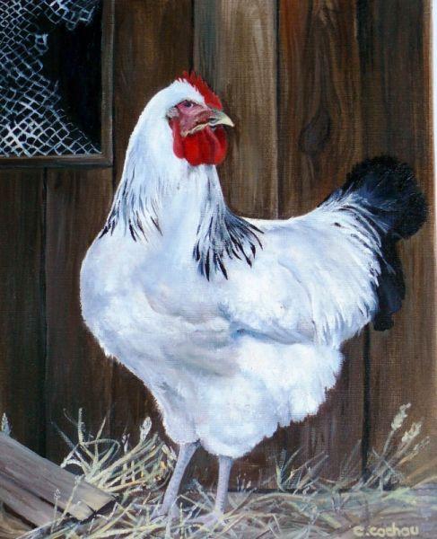 Tableau peinture poule animaux acrylique poule dessert - Peinture decorative sur bois et metal ...