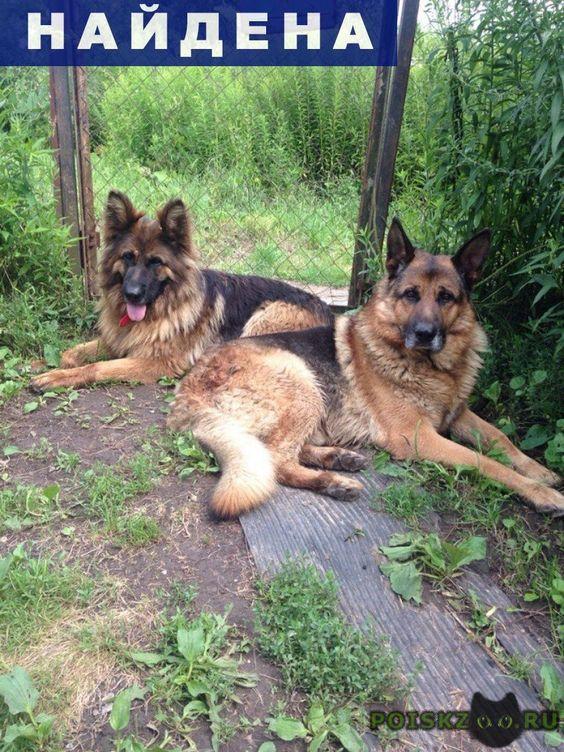 Найдена собака две овчарки г.Тула http://poiskzoo.ru/board/read26221.html  POISKZOO.RU/26221 В Туле в районе Метро найдены две немецкие овчарки. Ищем строго старых хозяев. У собак есть отличительные черты. Все вопросы можно задать по Тел. ...  РЕПОСТ! @POISKZOO2 #POISKZOO.RU #Найдена #собака #Найдена_собака #НайденаСобака #Тула