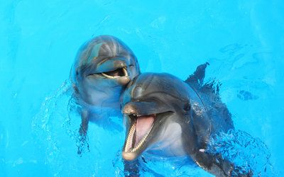 Flipper's Not Real: Dolphins May Suffer More than You Think - http://wp.me/p3EufV-kdo