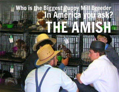 Did you know the Amish are the biggest puppy millers in the nation? Follow the link to see the pictures.