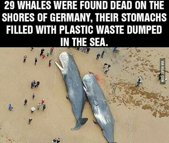 29 Whales Stranded on The Shores Of Germany
