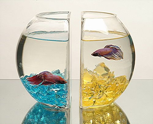 These fish bowls can double as bookends your two beta for Glass fish bowls
