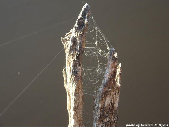 Interesting Spider Web Structure