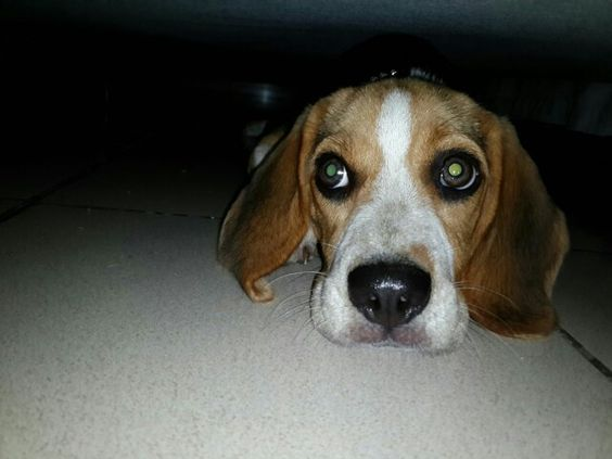 Miley bajo la cama